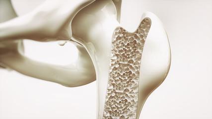 ホットヨガで骨密度が16%増加!| 会員さんインタビュー